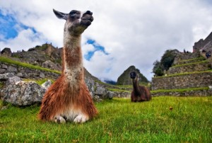 south america solo travel peru